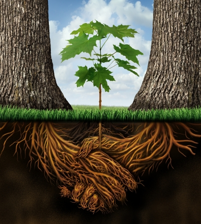integridad: Nuevo concepto developmentgrowth negocios con un grupo de dos árboles de socios que se unen como raíces de las plantas formadas como un apretón de manos acuerdo resultante de la creación de una nueva oportunidad de crecimiento del equipo Foto de archivo