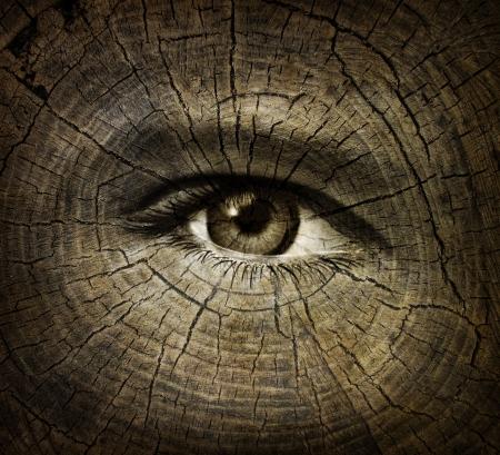 arbol de la vida: Envejecimiento o envejecimiento concepto con un ojo humano abierto en una textura de grano de madera de los anillos de árboles viejos como la asistencia sanitaria y médica idea del envejecimiento y los cambios o disminución de la función de una persona con el tiempo