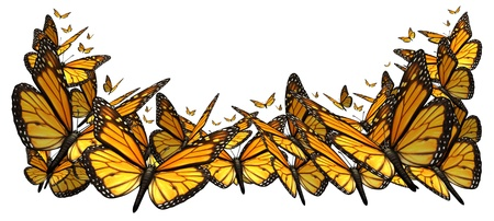 butterflies: Butterfly border design element isolated on a white background as a symbol of the beauty of nature with a group of monarch butterflies flying together