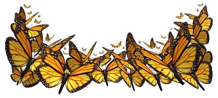 butterflies flying: Farfalla elemento di design di confine isolato su uno sfondo bianco come un simbolo della bellezza della natura, con un gruppo di farfalle monarca volare insieme Archivio Fotografico