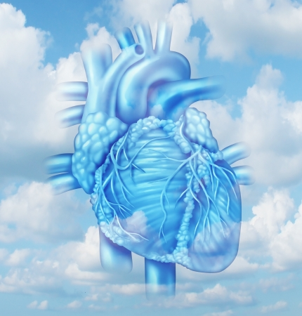 four chambers: Heart health medical concept with a human cardiovascular body part from a healthy person on a sky background as a medical symbol of clean arteries