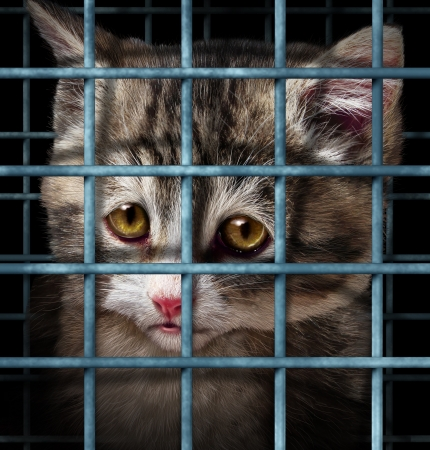 animal shelter: Pet adoption concept for orphaned and unwanted animals as cats or dogs caged in a shelter for pets represented by a sad cute kitten behind  metal prison bars  Stock Photo