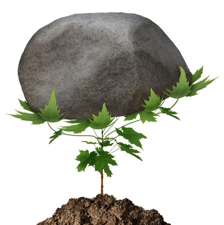 Powerful growth and unstoppable success as a small green tree sapling conquering adversity by emerging from the earth and lifting a huge rock obstacle that is in its path on a white background  photo