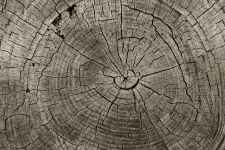 ageing: Tree rings old weathered wood texture with the cross section of a cut log showing the concentric annual growth rings as a flat nature background and conservation concept of forestry and aging