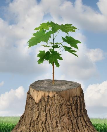 Nuovo sviluppo e di rinnovamento come un concetto di business di successo di leadership emergente con un vecchio albero tagliato verso il basso e un nuovo forte piantina cresce dal tronco centrale come un concetto di sostegno e di costruire un futuro