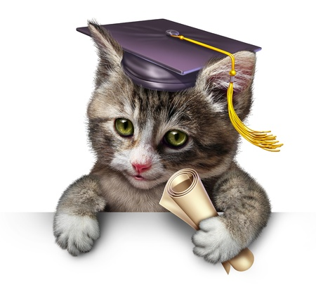 Pet school concept with a cute happy kitten wearing a graduation cap and holding a diploma as a symbol of animal training and veterinary education on a white background with blank space  Banque d'images