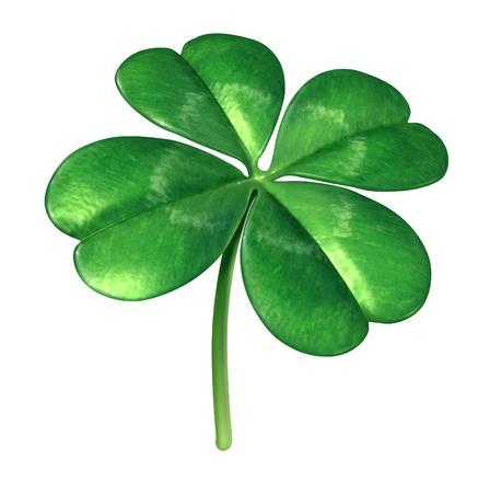 in bocca al lupo: Quattro foglia di pianta di trifoglio come simbolo irlandese per un icona verde portafortuna di fortuna e la fortuna come opportunit� di successo isolato su uno sfondo bianco Archivio Fotografico