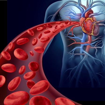 circolazione: Cuore la salute del sangue con globuli rossi che scorre attraverso tre vene tridimensionali dal sistema circolatorio umano che rappresenta un simbolo medico sanitario di cardiologia e fitness cardiovascolare
