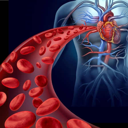 circulation: Heart blood health with red cells flowing through three dimensional veins from the human circulatory system representing a medical health care symbol of cardiology and cardiovascular fitness  Stock Photo