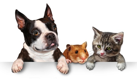 three animals: Pets sign for veterinary medicine and pet store or animal adoption advertising and marketing message with a cute dog hamster and a cat hanging on a horizontal white placard with copy space