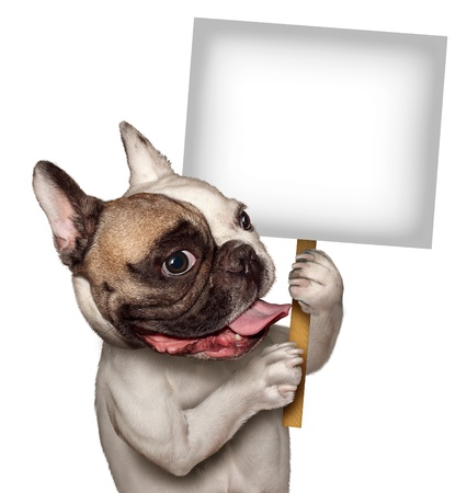 pertaining: Bull Dog holding a blank white sign as a French Bulldog with a smiling happy expression supporting and communicating a message pertaining to pet products and animal care or veterinary services