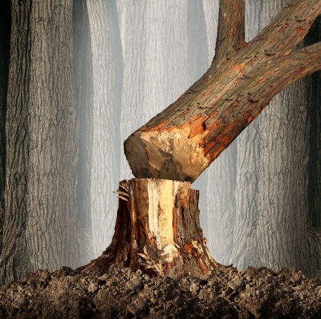 wood cut: Deforestation concept and when a tree falls symbol with an old tree in a forest being cut down for development or fire wood as a symbol of the environmental damage and problems in the conservation of the rainforest as in the Amazon  Stock Photo