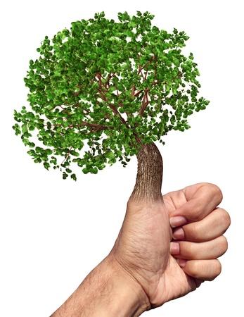 educacion ambiental: Pulgar verde y los dedos medio ambiente y el concepto de conservación con un árbol que crece de la mano, mientras que haciendo un gesto bien como un símbolo de la naturaleza y las habilidades de jardinería en un fondo blanco