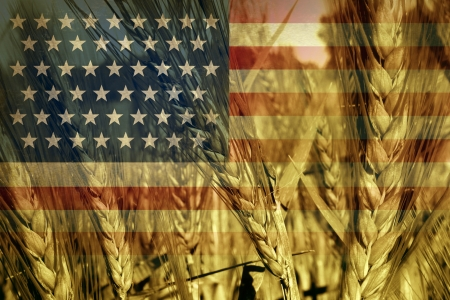 commodities: American agriculture concept and farming in the USA with the flag of America on a growing wheat grain field ready for harvest as a symbol of food production and commodity trading from industrial and family farms