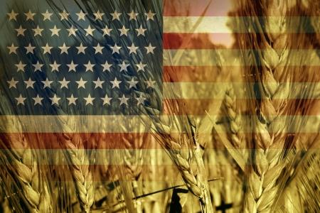 commodities: Americana concepto de la agricultura y la ganader�a en los EE.UU. con la bandera de Estados Unidos en un campo de grano de trigo listo para la cosecha que crece como un s�mbolo de la producci�n de alimentos y el comercio de productos b�sicos de las granjas industriales y familiares