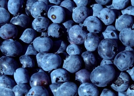 ビタミンや抗酸化物質の高い新鮮なベリー食品で健康焦点を当てたライフ スタイルのブルーベリー自然シンボルとして自然で健康的な食事概念の青