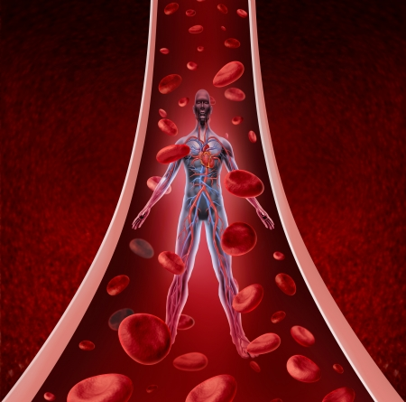 four chambers: Human circulation health as a heart cardiovascular concept with human anatomy from a healthy body flowing down a vein or artery with blood cells as a medical symbol of circulatory fitness  Stock Photo