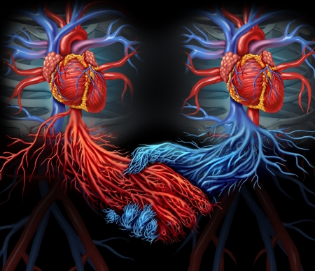 Health agreement medical concept with a group of two human hearts with the red and blue arteries connected together shaped as a hand shake as a symbol of organ and blood donation solutions