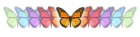 Imagination freedom with a monarch butterfly changing and going through a color transformation and evolution as a concept of free expression creativity and design innovation on white