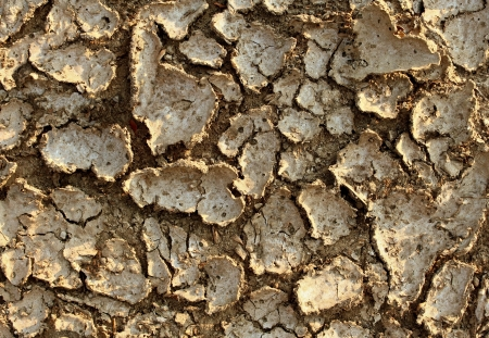 extreme heat: Drought environment background with dried earth cracked from lack of water caused by extreme heat and erosion resulting in farming problems as famine and global warming due to climate change and deforestation  Stock Photo