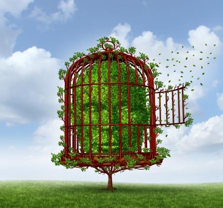 persoonlijke groei: Vrijheid van de geest concept als een boom in de vorm van een menselijk hoofd gevangen door takken gevormd als een open vogelkooi of vogelkooi voor persoonlijke groei en ontsnappen obstakels van het leven voor de verandering als een metafoor voor het denken buiten de doos