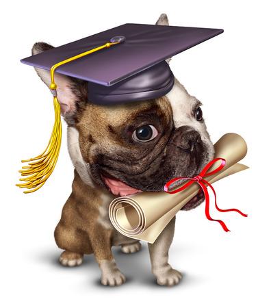 veterinario: El entrenamiento del perro mascota concepto de escuela con un perro que lleva un toro de graduaci�n con un diploma en su boca Foto de archivo