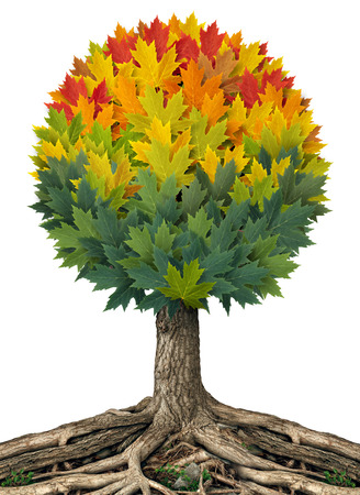 Autumn tree symol and spring summer fall season concept with a tree that has a group of leaves in the shape of a sphere turning from green to orange Stock Photo - 22666965