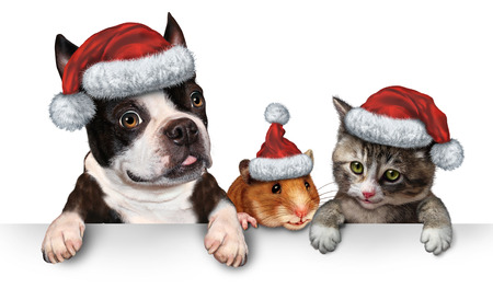 Christmas Pet sign for veterinary medicine and pet store or animal adoption winter holiday advertising and marketing message with a cute dog hamster and a cat with a santa hat hanging on a horizontal white placard with copy space