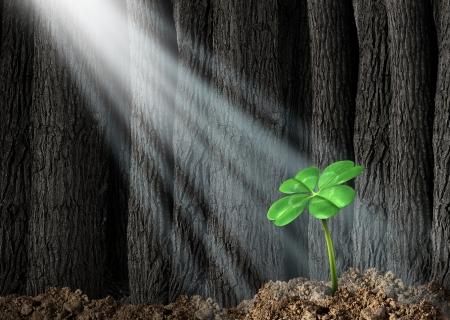 Découvrez possibilités et la prospérité de trouver le succès comme un concept d'entreprise avec un vert trèfle à quatre feuilles en croissance dans une sombre forêt aidé par des faisceaux de lumière du soleil shinning sur le symbole et icône de la fortune et chance