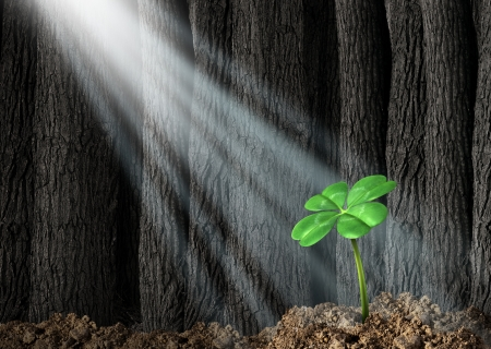 Discover opportunity and prosperity finding success as a business concept with a green four leaf clover growing in a dark forest helped by beams of bright sunlight shinning on the symbol and icon of fortune and luck