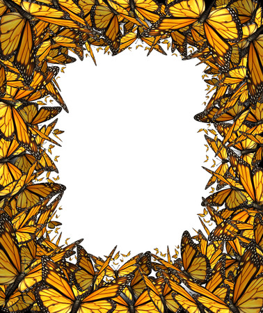 american butterflies: Butterfly border blank frame with flying group of Monarch butterflies working together forming a framed shape with a white background center for copy space as a concept for nature freedom and environmental conservation