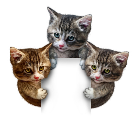 animal welfare: Cat or kitten group around a blank vertical card sign holding the framed message board as cute felines with smiling happy expressions supporting and communicating pet health care and  animal welfare  Stock Photo