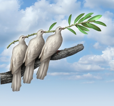 animals together: Group Diplomacy as a concept of negotiated peace with three white doves working together in partnership and friendship holding an olive branch as a symbol of fraternity and hope for the future of humanity on the journey for human rights and freedom
