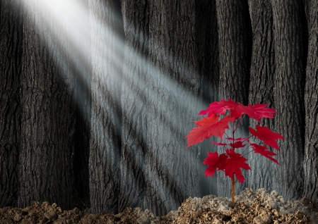 persistence: Great potential business metaphor with an old dark forest of tall trees and a young red leaf sapling emerging out of the ground as a symbol of future growth and hope for the future as an icon of investment growth and conservation of nature