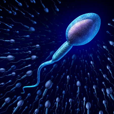 sex cell: Human sperm cell and male fertility concept with a close up of microscopic spermatozoa cells swimming towards an elusive female egg as a medical reproduction symbol of genetic information transfer and conception  Stock Photo