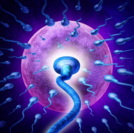 Human Fertility concept with an extreme persective close up of microscopic sperm or spermatozoa cells swimming towards a female egg cell to fertilize and create a pregnancy as a medical reproduction symbol  photo