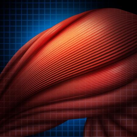 musculos: Dolor muscular humana o enfermedad mialgia como un concepto de salud medial Foto de archivo