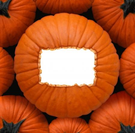 caes: Calabaza muestra en blanco como un concepto de la celebraci�n de Halloween y Acci�n de Gracias como un grupo de calabazas de color naranja y una pieza central con un marco de copia espacio en blanco para un mensaje de celebraci�n de la cosecha Foto de archivo