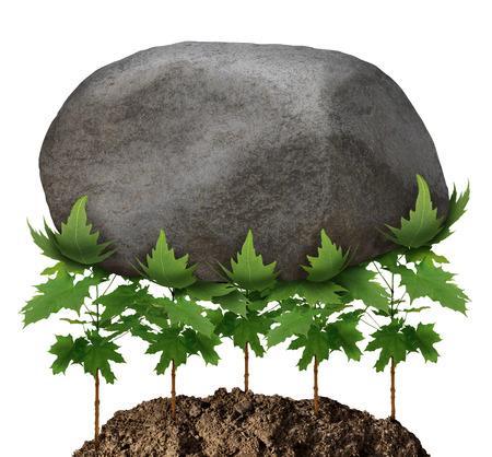 overcoming adversity: Team strength business metaphor and partnership concept with a group of young tree saplings working together as an organized company resulting in the ability to lift a heavy rock obstacle as a symbol of achievement potential