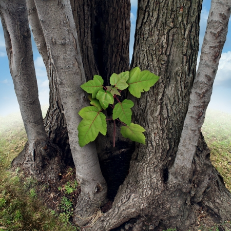 growing partnership: Safe investment business concept with a new green sappling being protected and nurtured by larger established trees growing around the budding team member as a financial metaphor for a secure place to invest wealth  Stock Photo