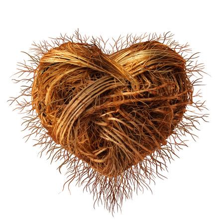 romance: Amore radici come un concetto per la cura per la conservazione dell'ambiente e della natura o la coltivazione di una storia d'amore forte come un gruppo di radici di piante come una rete connessa a forma di un simbolo del cuore per San Valentino Archivio Fotografico