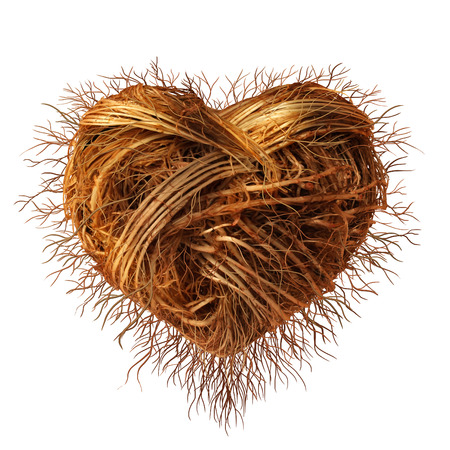 Hou wortels als een concept voor de zorg voor natuur-en milieu of een sterk groeiende romantiek als een plant wortel groep als een aangesloten netwerk gevormd als een hart symbool voor Valentijn