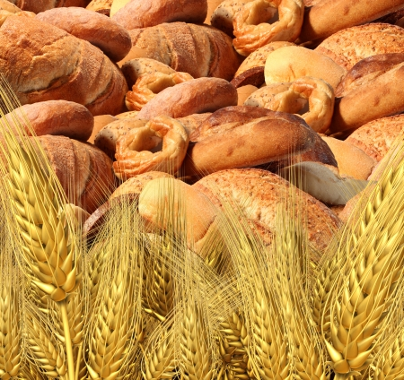 Wheat bread harvest food and agriculture farming concept with a group of baked goods from a bakery or home cooking and a field of durum semolina plants growing on a farm  Stock Photo - 24000213