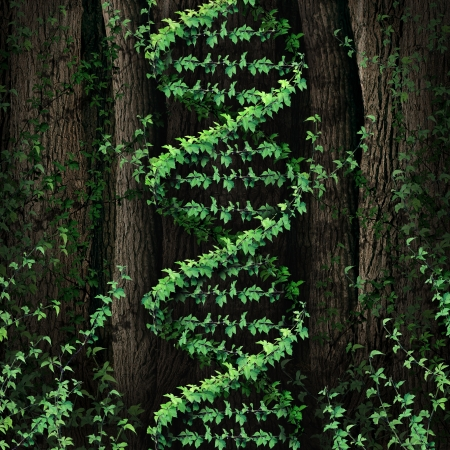 technology symbols metaphors: DNA nature symbol as a dark tree forest growing a green vine in the shape of a genetic double helix icon as a metaphor for biological technology and the science of biology in the natural world
