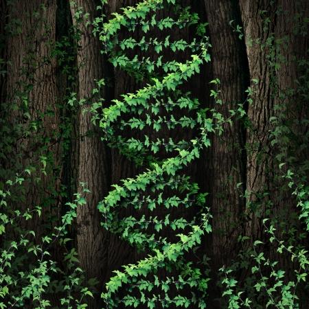genetica: DNA simbolo della natura come una foresta oscura che cresce una vite verde a forma di un'icona doppia elica genetica come metafora della tecnologia biologica e la scienza della biologia nel mondo naturale
