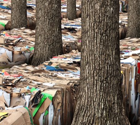 reprocessing: Renewable resource and recycling cardboard packaging concept with stacks of compressed corrugated paper garbage with a group of trees growing through as a symbol to recycle for conservation and the environment  Stock Photo