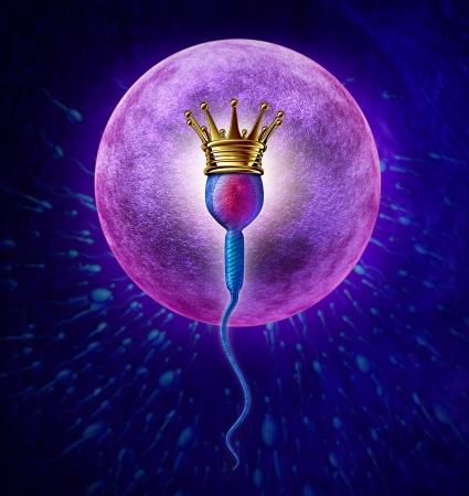 Winnende sperma menselijke vruchtbaarheid concept met een close-up van microscopische sperma of spermatozoa cel draagt een gouden kroon zwemmen naar een vrouwelijke eicel te bevruchten en een succesvolle zwangerschap als symbool medische reproductie