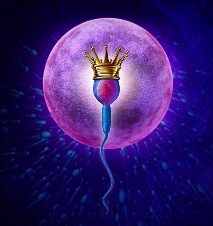 sex cell: Winning sperm human Fertility concept with a close up of microscopic sperm or spermatozoa cell wearing a gold crown swimming towards a female egg cell to fertilize and create a successful pregnancy as a medical reproduction symbol