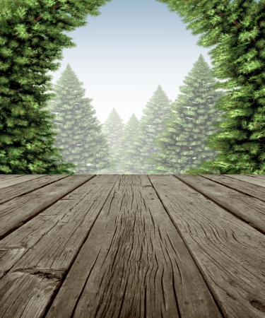 Winter forest frame scene on old weathered wood patio deck\ with a view of a wintery forest of green pine trees on a cold day\ as a symbol of the festive seasonal holiday in nature