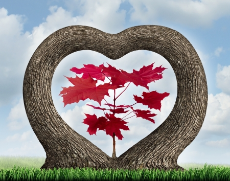 coming together: Heart tree with two growing plants merging together in romance giving birth to a red leaf maple  as a love concept of beauty in nature and a metaphor for valentine  or loving nature and the environment